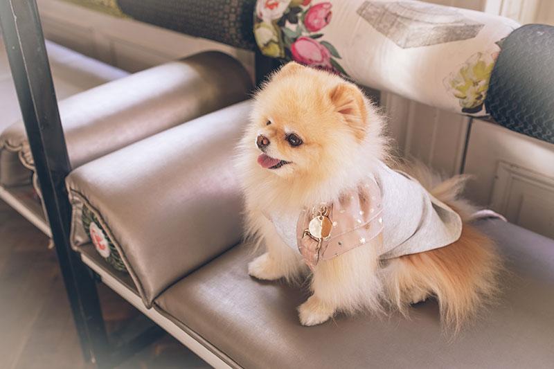 Cappottini per cani di piccola taglia