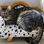 Raffreddore gatti: i sintomi e come curarlo