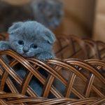 Comportamento gattini: i consigli per interpretarlo