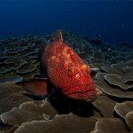 Pesci del Mediterraneo: le specie più diffuse
