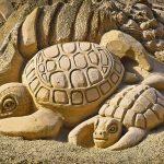 Cosa mangiano le tartarughe di terra: alimentazione di riferimento