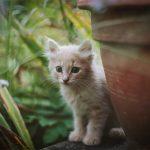 Antiparassitari per gattini: quale scegliere
