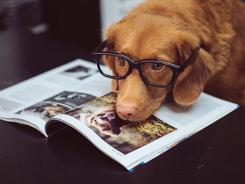 Assicurare il proprio cane