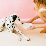 Cambiare cibo al cane: come muoversi e cosa valutare