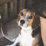 Cucce per cani in legno: da esterno e da interno