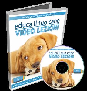 Educa il tuo cane