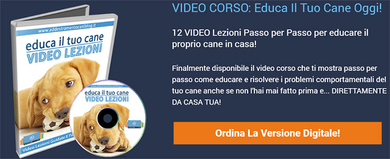 Video lezioni educare un cane