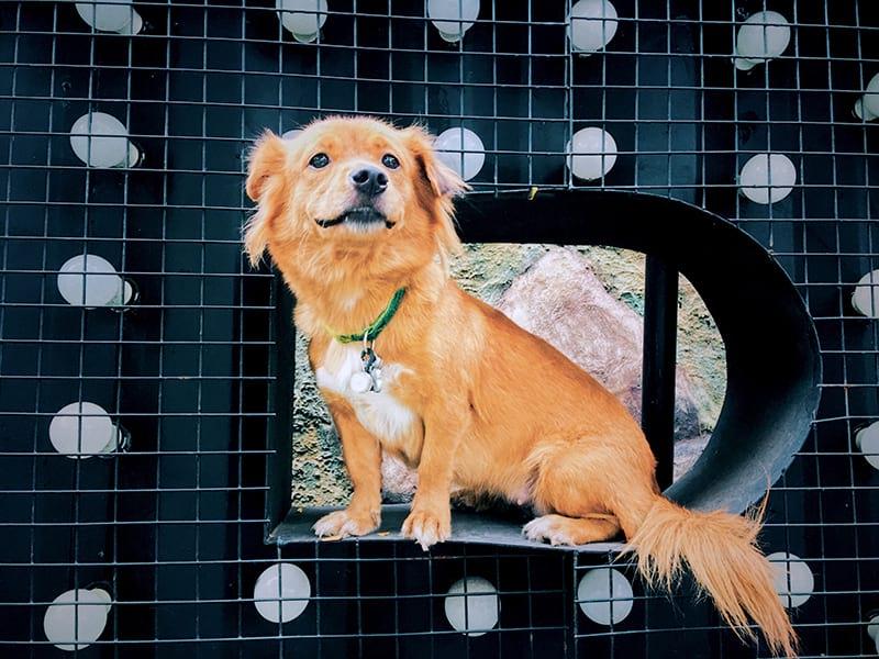 collare GPS per cani
