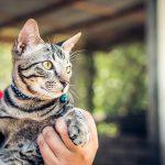 Collare GPS per gatti: guida alla scelta del miglior localizzatore