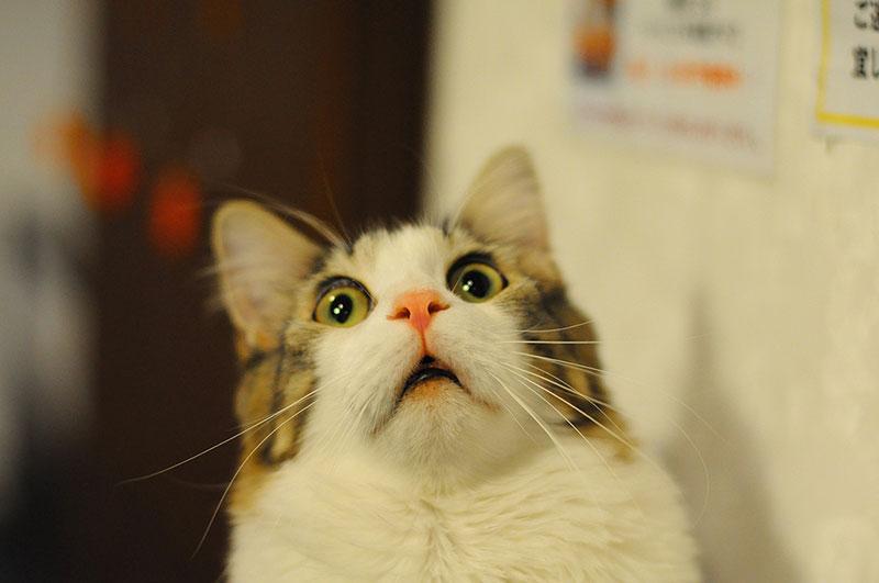 Gatto e cetriolo: perché i gatti hanno paura