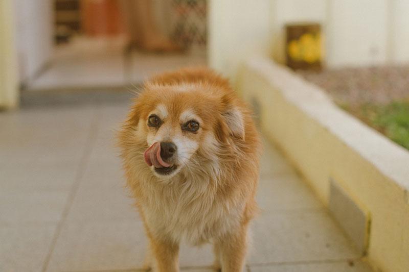 Cibo biologico per cani: i 5 benefici