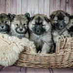 Gestazione cani: tempi e come gestirla