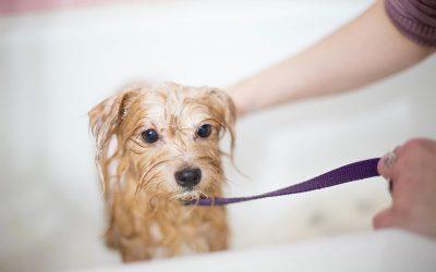 Shampoo per cane: i migliori e consigli utili