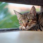 Cucce per gatti da esterno: guida alla scelta della migliore