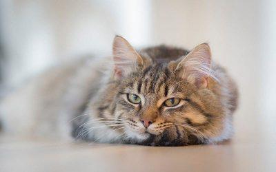 Migliore lettiera per gattini: guida alla scelta