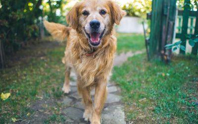 Migliori box per cani da esterno e da interno