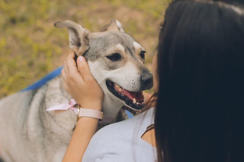Lavorare con gli animali: professioni e consigli