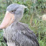 Animali stravaganti: i 20 più strani al mondo