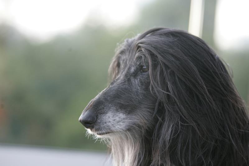 Tosatrice per cani professionale: guida alle migliori
