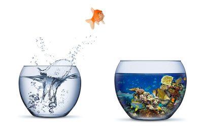 Acquari per pesci rossi: prezzi, dimensioni e come scegliere il migliore