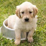 Alimentazione cucciolo di cane: quantità e migliori scelte