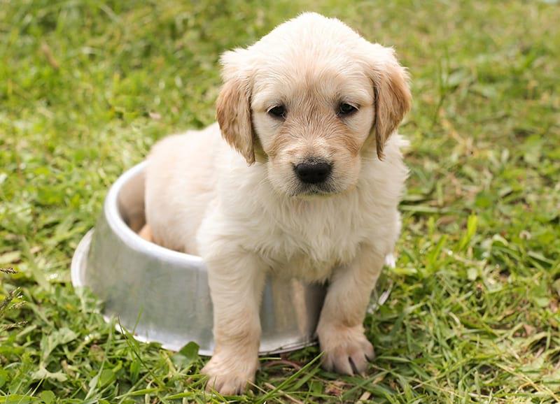 alimentazione cucciolo di cane