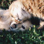 Assicurazione cane e gatto: perché è importante?