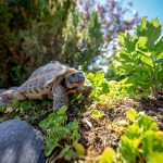 Terrario per tartarughe di terra (da esterno): come scegliere il migliore