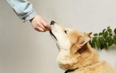 Dieta BARF cane: cos'è, pro e contro