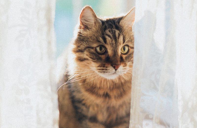 Lettiera per gatti autopulente: guida alla scelta della migliore