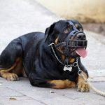 Museruole per cani: le migliori e quando è obbligatoria per legge