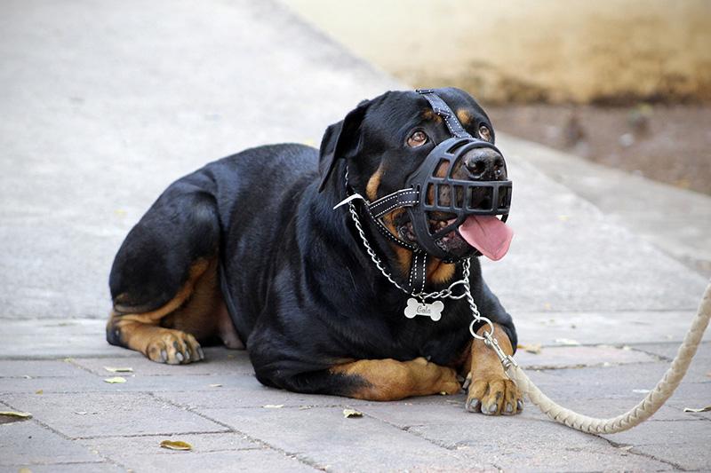 museruola per cani
